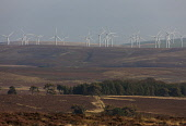 Crystal Rig Wind Farm in the Lammermuir Hills, Scottish Borders. Picture Credit : Andy Bennetts / Scottish Viewpoint   Tel: +44 (0) 131 622 7174  E-Mail : info@scottishviewpoint.com  This photograph c... Public 2012,autumn,sunny,energy,turbine,power,green,renewables,renewable,moor,moorland,heather,windfarm