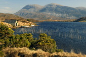 Loch Stack with a view to Arkle beyond, Sutherland, Highlands of Scotland. Picture Credit : Ross Graham / Scottish Viewpoint   Tel: +44 (0) 131 622 7174  E-Mail : info@scottishviewpoint.com  This phot... Public 2009,spring,sunny,highland,water,remote,boat,boathouse,house,fishing,angler,gorse,mountain