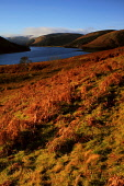 Morning scene of St Marys Loch in late Autumn, Scottish Borders. Picture Credit : Jason Baxter / Scottish Viewpoint   Tel: +44 (0) 131 622 7174  E-Mail : info@scottishviewpoint.com  This photograph ca... Public 2012,sunny,landscape,remote,mist,misty,atmospheric,scenic,rural,countryside,water,hills,hillside,bracken