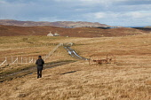 Walking at Nesting, Mainland, Shetland Picture Credit : Graham Uney / Scottish Viewpoint   Tel: +44 (0) 131 622 7174  E-Mail : info@scottishviewpoint.com  This photograph cannot be used without prior... Public 2012,autumn,activity,woman,walk,walker,ramble,rambler,path,track,fence,gate,farm,machine,machinery,isles,isle,island,abondoned,rusty