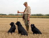Gun dogs in a field with their owner. Picture Credit: Scott Whitelaw / Scottish Viewpoint Tel: +44 (0) 131 622 7174   E-Mail : info@scottishviewpoint.com Web: www.scottishviewpoint.com This photograph... Public, MR 2012,autumn,activity,shoot,shooting,labrador,labradors,black,dog,working