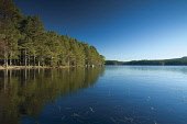 Loch Garten, Abernethy Nature Reserve, Highlands of Scotland. Picture Credit : Keith Fergus / Scottish Viewpoint   Tel: +44 (0) 131 622 7174  E-Mail : info@scottishviewpoint.com  This photograph canno... Public 2013,winter,sunny,atmospheric,Cairngorms,Cairngorm,National,Park,CNP,Reflection,Walk,Walking,Highland,ice,icy,frozen,cold,trees,forestry,water