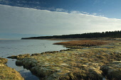 Tentsmuir Nature Reserve on the south side of the Firth of Tay, Fife. Picture Credit : Keith Fergus / Scottish Viewpoint   Tel: +44 (0) 131 622 7174  E-Mail : info@scottishviewpoint.com  This photogra... Public 2012,winter,sunny,atmospheric,NNR,national,frost,frosty,trees,forestry