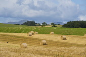 Fields at Thornhill, near Stirling, Central District. Picture Credit : D Barnes / Scottish Viewpoint   Tel: +44 (0) 131 622 7174  E-Mail : info@scottishviewpoint.com  This photograph cannot be used wi... Public 2012,summer,sunny,Farmland,harvest,farm,agriculture,hay,haybale,bales,bale,haybales,arable