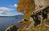 Two fishermen fishing from a boat on the Lake of Menteith, The Trossachs. Picture Credit : D Barnes / Scottish Viewpoint   Tel: +44 (0) 131 622 7174  E-Mail : info@scottishviewpoint.com  This photogra... Public 2012,autumn,sunny,leaves,colours,fall,lomond,national,park,tranquil,Central,Region,District,trees,woodland,water,activity,anglers,angler,fisherman
