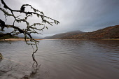 Loch Arienas, Morvern, Highlands of Scotland. Credit : Chris Simmons / Scottish Viewpoint  Tel: +44 (0) 131 622 7174  E-Mail : info@scottishviewpoint.com  Web: www.scottishviewpoint.com This photograp... Public 2013,winter,atmospheric,atmosphere,hill,hills,branch,branches,moody,mystery,brooding,water,flow,lichen,highland,cloudy,clouds