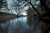 River Aline near Ardtornish, Morvern, Highlands of Scotland. Credit : Chris Simmons / Scottish Viewpoint  Tel: +44 (0) 131 622 7174  E-Mail : info@scottishviewpoint.com  Web: www.scottishviewpoint.com... Public 2013,winter,atmospheric,atmosphere,moody,mystery,brooding,water,highland,still,stillness,tree,trees,branch,braches,reflection,reflections,wood,woodland