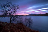 Dawn over Loch Teacuis, Morvern, Highlands of Scotland. Credit : Chris Simmons / Scottish Viewpoint  Tel: +44 (0) 131 622 7174  E-Mail : info@scottishviewpoint.com  Web: www.scottishviewpoint.com This... Public 2013,winter,atmospheric,atmosphere,hill,hills,moody,mystery,brooding,water,highland,cloudy,clouds,dusk,morning,sunrise,early,tree,trees,branch,branches