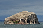 The Bass Rock in the Firth of Forth viewed from the East Lothian coastline.  Picture Credit : Jack Byers / Scottish Viewpoint  Tel: +44 (0) 131 622 7174  E-Mail : info@scottishviewpoint.com  Web: www.... Public 2011,sunny,lighthouse,volcanic,plug,island,bird,colony,birds,gannet,gannets,dramatic