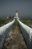 The Low Light lighthouse on the Isle of May - the island can be reached during the Summer months on the May Princess sailing from Anstruther, East Neuk of Fife. Picture Credit : Jack Byers / Scottish... Public 2012,sunny,weather,fog,mist,misty,haar,atmospheric,firth,forth,building,light,house,path