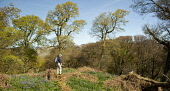 Walking in Castramont Wood in the Fleet Estuary National Scenic Area, Dumfries and Galloway. Picture Credit : Allan Devlin / Scottish Viewpoint  Tel: +44 (0) 131 622 7174  E-Mail : info@scottishviewpo... Public 2012,spring,sunny,tree,fresh,colour,green,leaves,woodland,flowers,wild,flora,bluebells,people,walker,walk,doon