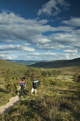 Glen Lui from Creag Bad an t Seabhaig, Derry Cairngorm, Aberdeenshire. Picture Credit : Keith Fergus / Scottish Viewpoint  Tel: +44 (0) 131 622 7174  E-Mail : info@scottishviewpoint.com  Web: www.scot... Public, NMR 2012,summer,sunny,walking,walk,walkers,people,hill,hills,hillwalking,hillwalkers,back,packs,rucksacks,campers,camping,Cairngorms,National,Park,CNP,trees,forestry,path,footpath