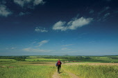 A walker on The John Muir Way at Drylaw Hill, with a view beyond towards North Berwick Law, East Lothian. Picture Credit : Keith Fergus / Scottish Viewpoint Tel: +44 (0) 131 622 7174 E-Mail : info@sco... Public 2012,summer,sunny,walking,walk,people,track,long,distance,footpath,countryside,fields