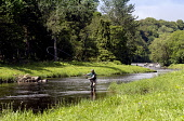 Salmon fishing on the River South Esk near Montrose, Angus. Picture Credit : Mike Clarke / Scottish Viewpoint  Tel: +44 (0) 131 622 7174  E-Mail : info@scottishviewpoint.com  Web: www.scottishviewpoin... Public, NMR 2011,summer,sunny,fisherman,angler,activity,cast,casting,line,fly,water,people