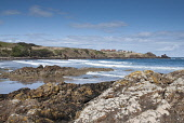 Coldingham Bay, Scottish Borders. Picture Credit : Darren Miller / Scottish Viewpoint   Tel: +44 (0) 131 622 7174  E-Mail : info@scottishviewpoint.com  This photograph cannot be used without prior per... Public 2012,spring,sunny,Beach,Rocks,Rocky,Shoreline,Water,Waves,Surfing,Surfers,Coast,Coastal