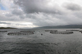 Salmon fish farm cages in Loch Fyne between Portavadie and the Mull of Kintyre, Argyll.  Photograph � Colin McPherson, 25/05/02. Tel. +44 (0)1968 661644 or 07831 838717. Colin McPherson