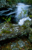 LOOKING OVER ROCKS DOTTED WITH FALLEN AUTUMNAL LEAVES TO THE FAST FLOWING WATER OF THE RIVER FARRAR IN GLEN STRATHFARRAR, THE BADENOCH AND STRATHSPEY DISTRICT, HIGHLAND. PIC: PETER CAIRNS/SCOTTISH VIE... PUBLIC, NMR WATER,FORESTRY,AUTUMN,SUNNY