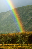 LOOKING OVER TO A RAINBOW ABOVE GLENFESHIE, THE BADENOCH AND STRATHSPEY DISTRICT, HIGHLAND. PIC: PETER CAIRNS/SCOTTISH VIEWPOINT Tel: +44 (0) 131 622 7174   Fax: +44 (0) 131 622 7175 E-Mail : info@sco... PUBLIC, NMR AUTUMN,FORESTRY,WOOD,TREES,WEATHER
