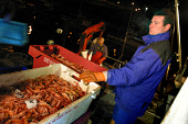 Fishermen at the port of Eyemouth in the Scottish Borders unloading freshly caught prawns from their fishing boat after a day at sea.  Photograph � Colin McPherson, 30/10/02. Tel. +44 (0)1968 661644 o... Colin McPherson
