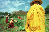 Story by Jean West for Monday 30/09/02. *NO COPYING/ARCHIVING OF THIS PHOTOGRAPH PERMITTED: Monks and nuns working in the garden of the Holy Island retreat off Arran, where 12 women from around the wo... Colin McPherson