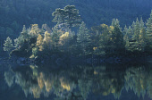 AUTUMNAL PINE AND BIRCH WOODLAND REFLECTED IN LOCH A MHEADHOIN, GLEN AFFRIC, HIGHLAND Peter Cairns/ Scottish Viewpoint Tel: +44 (0) 131 622 7174   Fax: +44 (0) 131 622 7175 E-Mail : info@scottishviewp... ATMOSPHERIC,WATER,TREES,AUTUMN