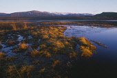 LOCH INSH IN THE LAST RAYS OF THE WINTER SUN STRATHSPEY Peter Cairns/ Scottish Viewpoint Tel: +44 (0) 131 622 7174   Fax: +44 (0) 131 622 7175 E-Mail : info@scottishviewpoint.com This photograph shoul... HILLS,WINTER,TEXTURE