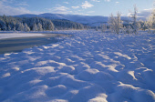 A FROZEN FOREST LOCHAN AT DAWN ON A WINTERS MORNING, GLENFESHIE, STRATHSPEY Peter Cairns/ Scottish Viewpoint Tel: +44 (0) 131 622 7174   Fax: +44 (0) 131 622 7175 E-Mail : info@scottishviewpoint.com T... HILLS,WINTER,TREES,TEXTURE,SNOW,ICE