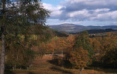 LOOKING OVER AUTUMNAL TREES IN GLEN MUICK-  CARRYING THE RIVER OF MUICK NORTH EAST TO THE RIVER DEE, NEAR BALLATER, ABERDEENSHIRE. PIC: VisitScotland/SCOTTISH VIEWPOINT Tel: +44 (0) 131 622 7174   Fax... WOODLAND,HILLS,AUTUMN,SUNNY,FORESTRY,HILL