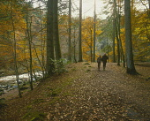 LOOKING OVER TO A COUPLE WALKING IN WOODLAND AT THE HERMITAGE NEAR DUNKELD, PERTH & KINROSS. PIC: P.TOMKINS/VisitScotland/SCOTTISH VIEWPOINT Tel: +44 (0) 131 622 7174   Fax: +44 (0) 131 622 7175 E-Mai...