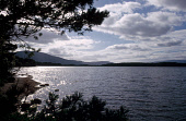 LOOKING PAST TREES BY THE WATER'S EDGE OVER LOCH GARTEN- A SMALL LOCH IN THE ABERNETHY FOREST, BADENOCH AND SPEYSIDE DISTRICT, HIGHLAND. PIC: VisitScotland/SCOTTISH VIEWPOINT Tel: +44 (0) 131 622 7174... WATER,SUMMER,SUNNY,FORESTRY,MOUNTAIN,NATURE RESERVE