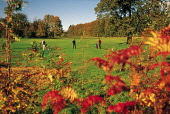 LOOKING OVER TO GOLFERS PLAYING ONE OF THE GREENS OF THE GOLF COURSE IN POLLOK COUNTRY PARK- 361 ACRES OF PARKLAND AND GARDENS SURROUNDING POLLOK HOUSE BY WHITE CART WATER, SOUTH WEST OF GLASGOW CITY... ACTIVITY,SUNNY,SPORT,AUTUMNAL COLOURS,AUTUMN