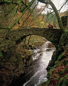 LOOKING OVER TO A COUPLE ON A PRETTY STONE BRIDGE CROSSING THE RIVER BRAAN IN WOODLAND AT THE HERMITAGE NEAR DUNKELD, PERTH & KINROSS. PIC: P.TOMKINS/VisitScotland/SCOTTISH VIEWPOINT Tel: +44 (0) 131... 2002,WALKING,WALKERS,ROMANTIC,PEOPLE,MOSS,AUTUMNAL COLOURS,AUTUMN