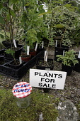 PLANTS FOR SALE AT THE NURSERY AT THE HOUSE OF PITMUIES GARDEN, GUTHRIE,  BY FORFAR, ANGUS. PIC: P.TOMKINS/VisitScotland/SCOTTISH VIEWPOINT Tel: +44 (0) 131 622 7174   Fax: +44 (0) 131 622 7175 E-Mail... 2006,SUMMER,SIGN,RETAIL,PLANT MONEY JAR,GARDENS,GARDENING,ATTRACTION