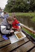 POND DIPPING AT CREAM O' GALLOWAY, ORGANIC DAIRY AND ICE CREAM PRODUCERS, RAINTON FARM, NEAR GATEHOUSE OF FLEET, DUMFRIES AND GALLOWAY.  Picture Credit : P.TOMKINS / VisitScotland / SCOTTISH VIEWPOINT... Public, MR 2006,SUMMER,PEOPLE,CHILDREN,CHILD,KIDS,ACTIVITY,ATTRACTION,TOURIST,VISITOR