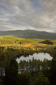 VIEW TO THE CAIRNGORMS, ACROSS GLEN FESHIE AND SOME SMALL LOCHS (LOCHANS) INCLUDING UATH LOCHAN, IN  THE INSHRIACH FOREST BY FESHIEBRIDGE, NEAR KINCRAIG, STRATHSPEY - IN THE CAIRNGORM NATIONAL PARK, H... AUTUMN,AUTUMNAL,SUNNY,WATER,HILL,HILLS,TREES,FORESTRY,2006,HIGHLANDS,SCOTLAND