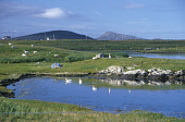 LOOKING OVER THE FORESHORE AT THE SETTLEMENT OF CREAGORRY (GAELIC : CREAG GHORAIDH), ON THE SOUTH COAST OF BENBECULA, WITH A VIEW TO THE HILL OF RUEVAL BEYOND, OUTER HEBRIDES. Picture: SUE ANDERSON /... DUCKS,WATER,SUNNY,SHEEP,ISLE,ISLANDS,ISLAND