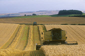 A COMBINE HARVESTER IN A FIELD. PIC: GLYN SATTERLEY/SCOTTISH VIEWPOINT Tel: +44 (0) 131 622 7174   Fax: +44 (0) 131 622 7175 E-Mail : info@scottishviewpoint.com This photograph can not be used without... AGRICULTURE,TRACTOR,SUNNY,SUMMER,SCOTLAND,HARVESTING,GENERIC,FARMING