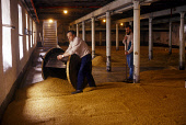 TWO EMPLOYEES ON THE MALTING FLOOR OF A DISTILLERY. PIC: GLYN SATTERLEY/SCOTTISH VIEWPOINT Tel: +44 (0) 131 622 7174   Fax: +44 (0) 131 622 7175 E-Mail : info@scottishviewpoint.com This photograph can... EMPLOYEE,WORKER,WHISKY,SCOTLAND,MANUFACTURE,INTERIOR,INDUSTRY,GRAIN,GENERIC