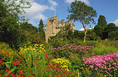 CRATHES CASTLE- A TURRETED TOWER HOUSE DATING FROM THE 16C WITH 17C AND 19C EXTENSIONS AND RENOWNED FOR ITS GARDENS, EAST OF BANCHORY, ABERDEENSHIRE. PIC: S.BUCHANAN/SCOTTISH VIEWPOINT Tel: +44 (0) 13... FLOWERS,SUNNY,SUMMER,SCOTLAND,NTS,NATIONAL TRUST FOR SCOTLAND,GARDENS,GARDEN
