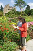 A COUPLE EXAMINE SOME OF THE FLOWERS IN THE GARDENS AT CRATHES CASTLE- A TURRETED TOWER HOUSE DATING FROM THE 16C WITH 17C AND 19C EXTENSIONS AND RENOWNED FOR ITS GARDENS, EAST OF BANCHORY, ABERDEENSH... FLOWERS,SUNNY,SUMMER,SCOTLAND,NTS,NATIONAL TRUST FOR SCOTLAND,GARDEN