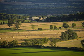 View overlooking rural aspects of the central Scottish Borders on a late summers evening during harvest time.  Picture credit : Jason Baxter / Scottish Viewpoint This photograph cannot be used without... Jason Baxter / Scottish Viewpoin 2013,afternoon,farmland,fields,landscape,light,outdoors,pm,rolling,rural,scenic,summer,sunny,valley,agriculture,farm,farms,farming,atmospheric,tree,trees,wood,woodland,forestry,forest,arable,field,cro