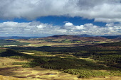 Ben Rinnes and Abernethy Nature Reserve from Meall a Bhuachaille, Cairngorm National Park, Highlands of Scotland. Keith Fergus / SV 2013,summer,sunny,activity,activities,walk,walking,hill,hills,hillwalking,tree,trees,forestry,atmospheric,clouds,shadows,countryside,highland,CNP,mountain,mountains