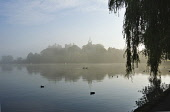 The view across a misty Linlithgow Loch to Linlithgow Palace and St Michael's Parish Church, Linlithgow, West Lothian. Dennis Barnes / Scottish Viewpoi 2013,autumn,atmospheric,silhouette,mist,fog,foggy,bird,birds,duck,ducks,water,building,religion,attraction,visitor,tourist,history,heritage,historic,scotland,hs