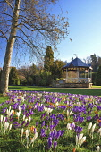 Spring bulbs at Bellfield Park, with the bandstand visible, Inverness, Highlands of Scotland. Mike Tibbs / Scottish Viewpoint 2013,spring,sunny,flora,flower,flowers,plant,plants,garden,gardens,gardening,crocus,crocuses,croci,recreation,community
