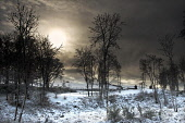 Snowy scene at the Rosehaugh Estate on the Black Isle at dusk, Highlands of Scotland. Mike Tibbs / Scottish Viewpoint 2009,winter,atmospheric,evening,late,afternoon,light,tree,trees,wood,woodland,snow,cold,silhouette,orb,highland