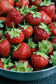 FRESH STRAWBERRIES FROM FIFE. Paul Dodds / Scottish Viewpoint food,no people,peel,produce,crop,crops,prepare,preparation,berry,berries,summer,strawberry