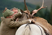 A demonstration of stalking at the Lochaber Agricultural Show, Fort William, Highlands of Scotland. Kenny Ferguson / Scottish Viewpo agriculture,livestock,animal,animals,people,person,stalker,stalkers,deerstalker,red,stag,carcass,horse,pony,carry,carrying
