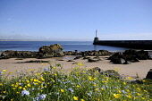The beach at Aberdeen, with a view beyond to the harbour wall. Allan Wright / Scottish Viewpoin summer,sunny,sunshine,water,beach,beaches,sand,sandy,coast,coastal,coastline,sea,flower,flowers,wild,flora