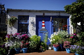 Footdee, also known as Fittie, a small fishing village of quaint cottages in the harbour area of Aberdeen. Allan Wright / Scottish Viewpoin summer,sunny,sunshine,water,cottage,house,housing,painted,flowers,flower,tub,tubs,pot,pots,colourful,lighthouse,quirky