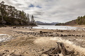 Old tree stumps on the sandy shoreline of Loch Beinn a' Mheadhoin, Glen Affric, Highlands of Scotland. Laurence Leech / Scottish Viewpo 2013,winter,spring,atmospheric,HDR,Mheadain,NNR,National,Nature,Reserve,activity,activities,walk,walking,hill,hills,water,trees,forest,forestry,mountain,mountains,snow,snowy,highland